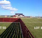 lot-50-31